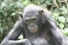 Elderly Bonobo lady