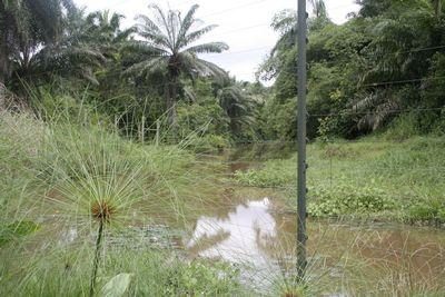 Bonobo park