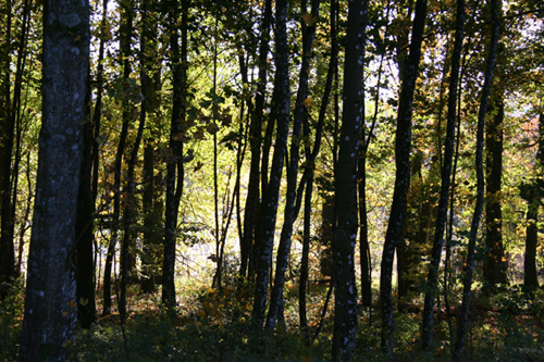 Forests of the Baraque Fraiture during autumn